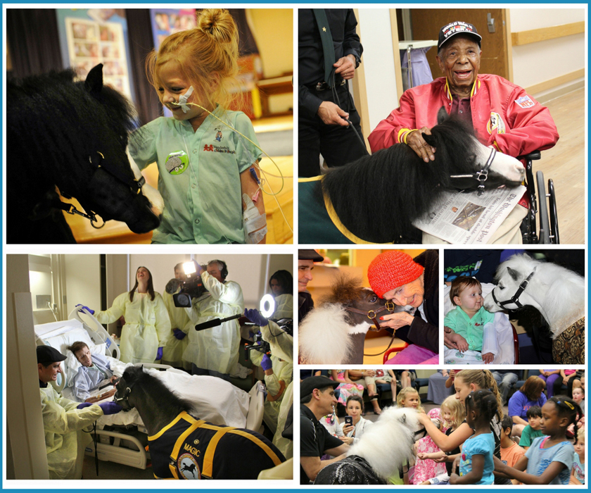 Gentle Carousel Miniature Therapy Horses Hero Horse News Home Pet Animal Equine 840x700