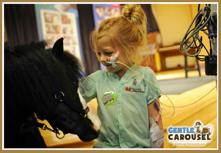 Little Hero Gentle Carousel Miniature Therapy Horses Donate Mini Service Hospital Visit 844x584