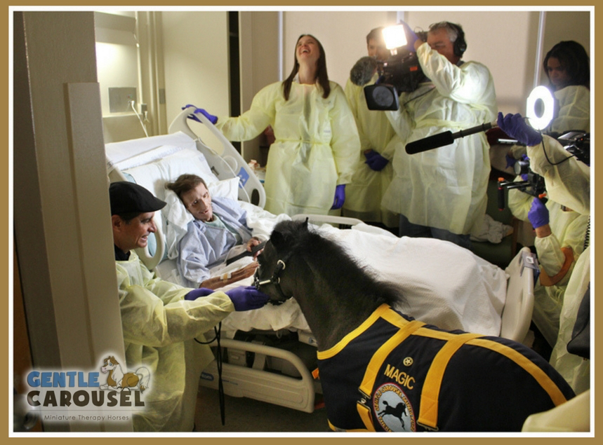 magic hero horse therapy gentle-carousel hospital nyc 859x635
