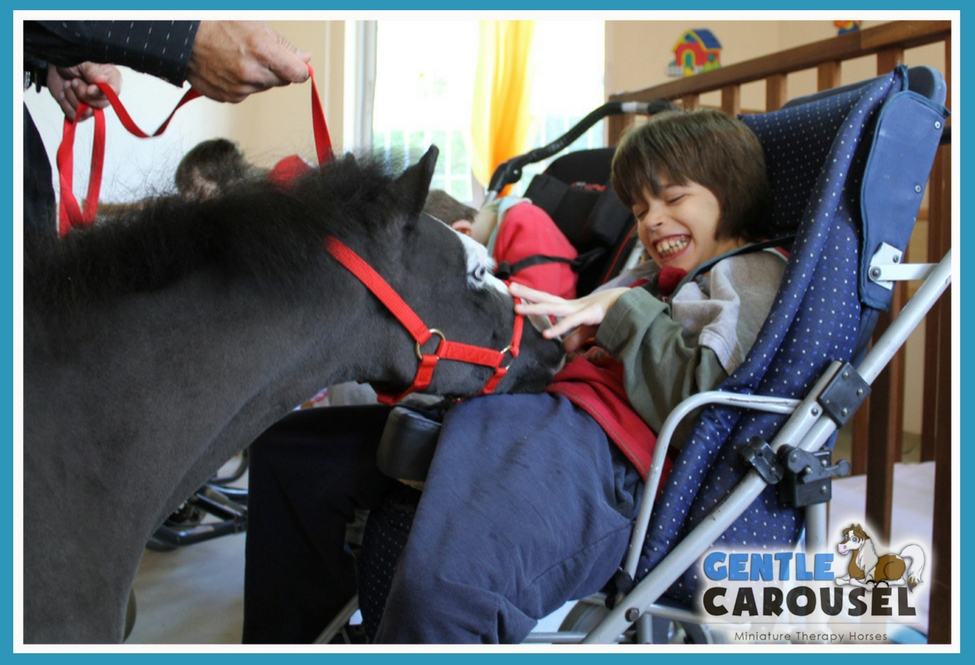 Therapy Miniature  Horse News Gentle Carousel Institution Greece 975x665