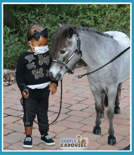 Therapy horse horses contact gentle carousel sparkle hospital 642x738