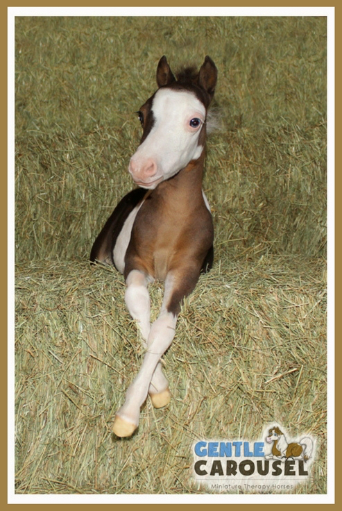 little hero horse scout portrait gentle carousel mini therapy horses 493x736