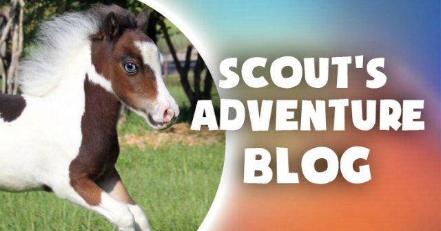 Therapy Horse Scout
