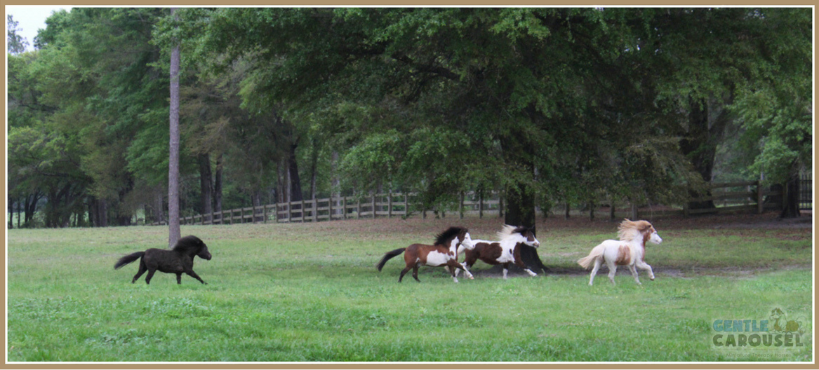 Miniature Horses Equine Therapy Farm Gentle Carousel 1167x528