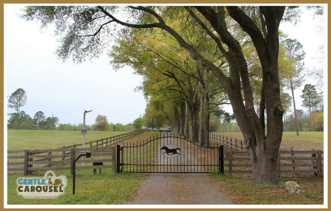 farm home of gentle carousel miniature therapy horses gate 1105x706