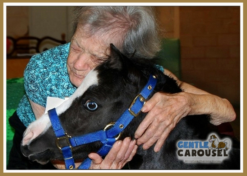 hero horse magic gentle carousel miniature therapy horses hug 795x565
