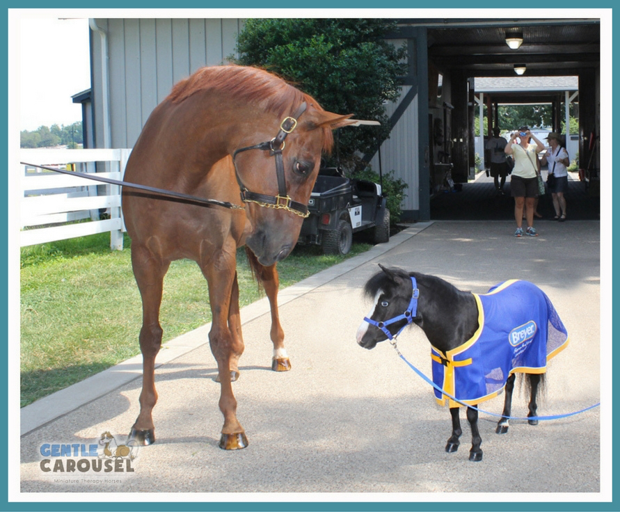little hero horse magic with funny cide gentle carousel mini therapy horses 891x736