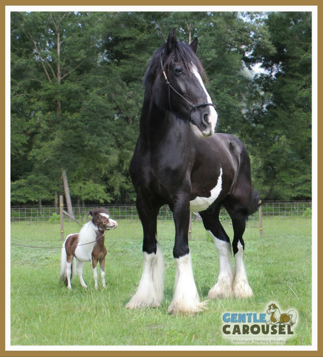 little therapy horse scout hero-horses-gentle-carousel at farrier farm 631x697