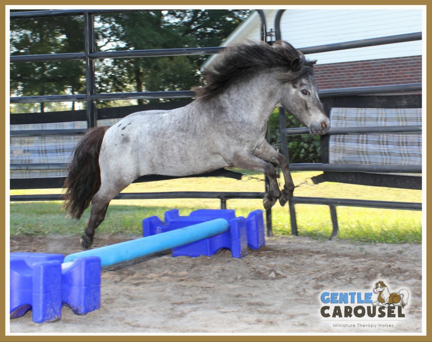 therapy horse sparkle jump gentle carousel hero horses training 850x673