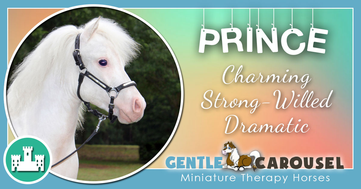 Prince Miniature Horse - Equine Horse Therapy 1200x630