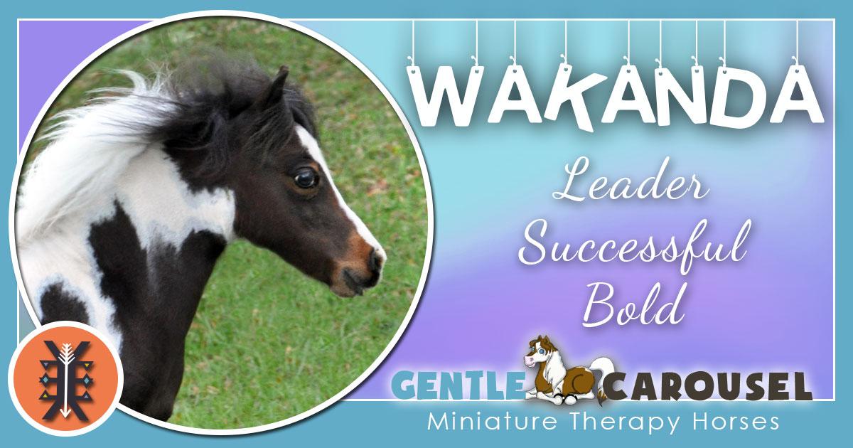 Wakanda Miniature Horse - Equine Horse Therapy 1200x630