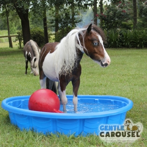 Horse Quiz Gentle Carousel Making Relaxing by the Pool 300x300