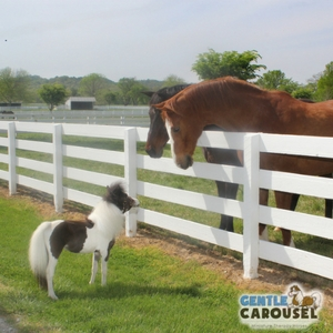 Horse Quiz Gentle Carousel Talking with Friends 300x300